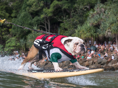 Good News Story Alert – The Ipromea Surfing Dog
